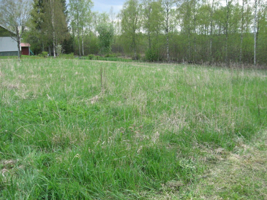 ... and even more grass ...